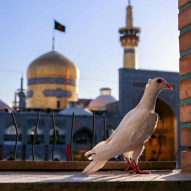 مهمانپذیر امیر فخریان در مشهد - مشهد سرا