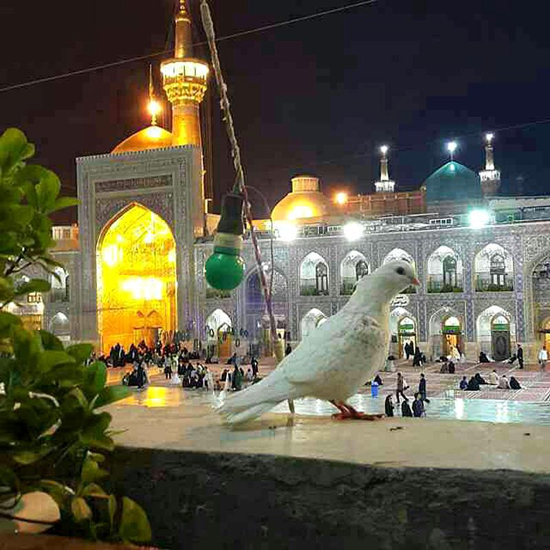 مسافرخانه شهمیرزاد در مشهد | مشهدسرا - 1435